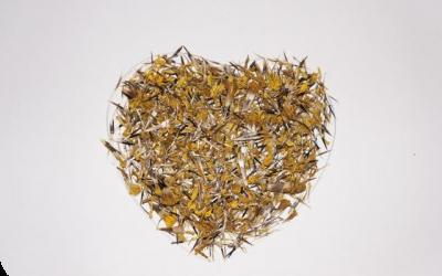 Marigold seeds